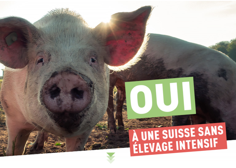 Oui à une Suisse sans élevage intensif