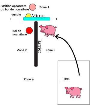 Schema-test-miroir-cochons.jpg